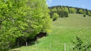 Ruhig und malerisch: die Aussicht hinter dem Haus Waldeck